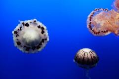aquarium-Monterey2